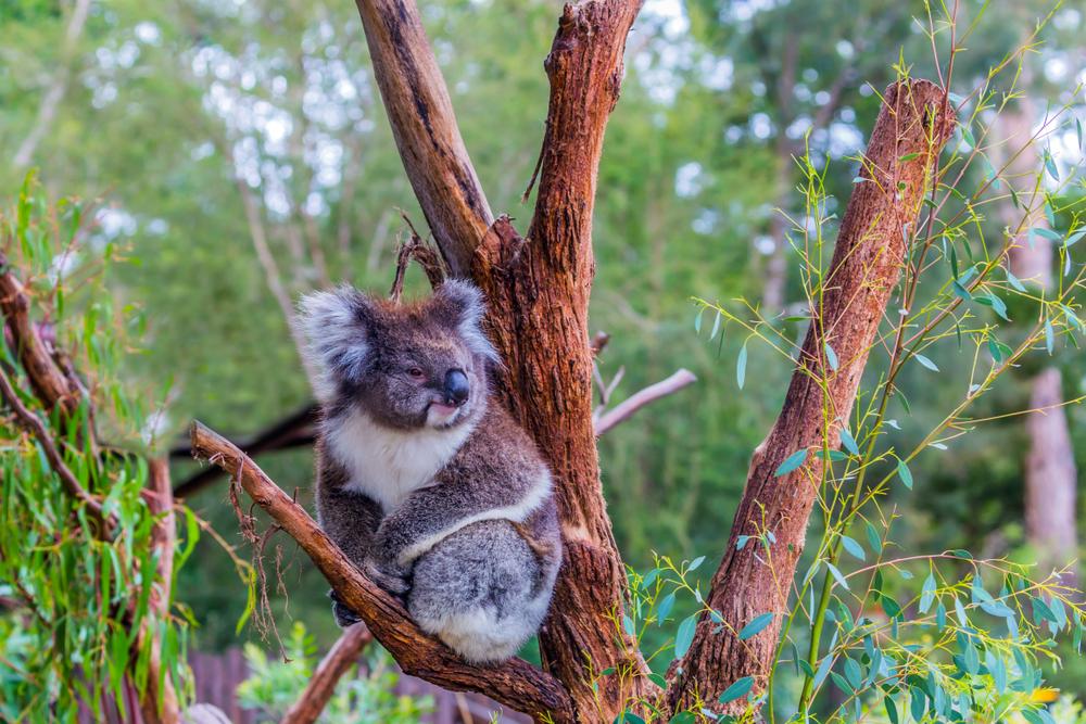 Animals and ecotourism
